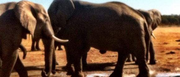 Elefantes del PN Hwange, Zimbabwe