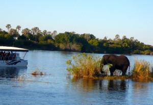 Elefante junto a las Cataratas Victoria