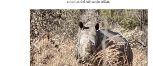 Rinocerontes en Matobo, Zimbabue. Foto: Luis Davilla