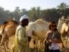 Darau, el principal mercado de camellos del sur de Egipto