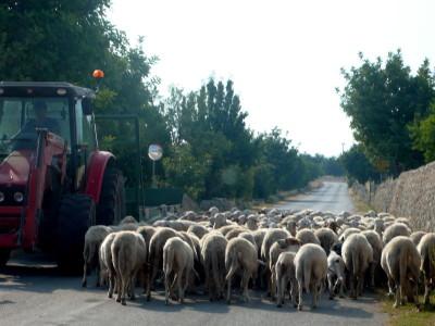 Otras sorpresas del tráfico en Sicilia