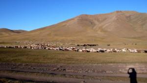 La sombra de una servidora ante uno de los rebaños del Valle de Orkhon.