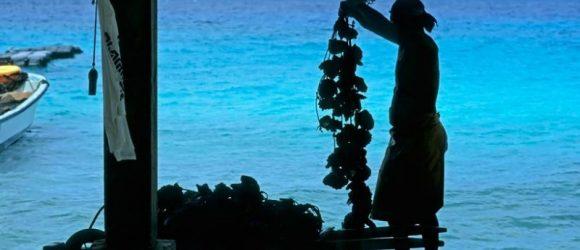 Una granja de perlas negras en el archipiélago polinesio de las Tuamotu