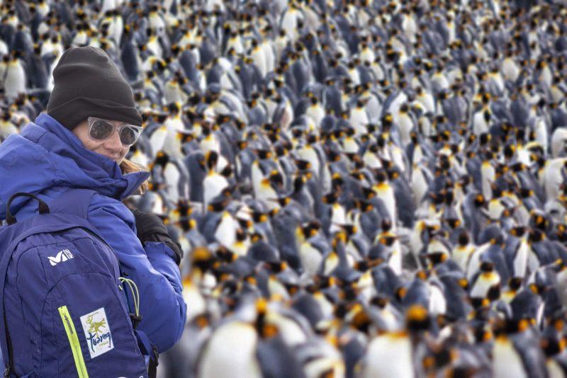 Una servidora entre la legión de pingüinos (@luisdavilla)
