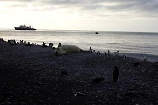 Desembarcos en zodiac por el Mar de Ross (Antártida)